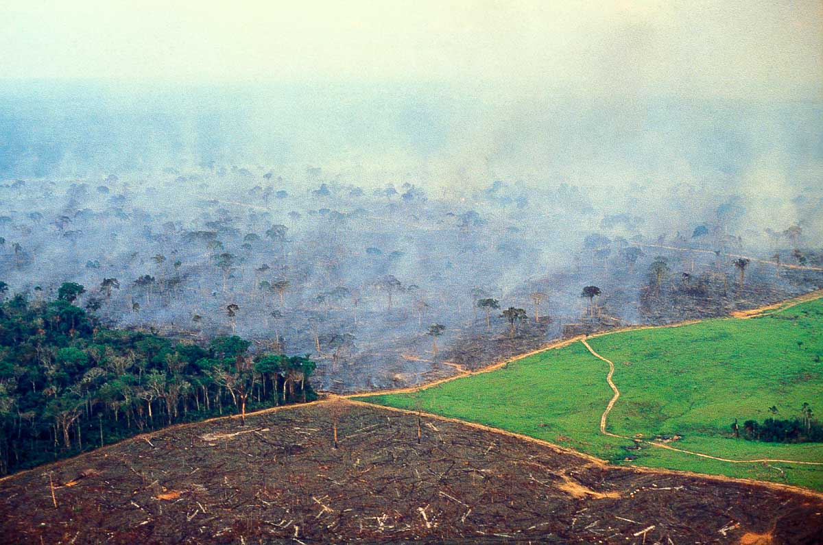 Amazon-deforestation-ECDE0110.jpg